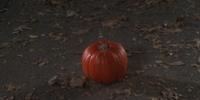 Royal Carriage Pumpkin