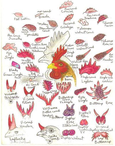 ChickenCombsRossSimpson