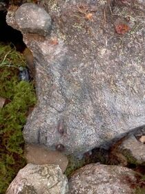 Peeta disguised as a rock