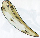 File:Fang.png