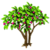 Jujube Tree-icon