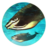 File:Whales (Civ5).png
