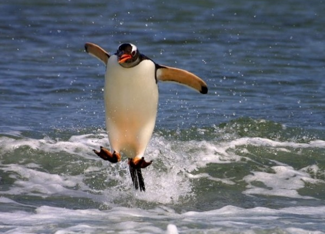 File:Cool-penguin-linux.png