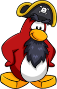 Rockhopper Looking Down