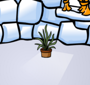 The snake grass in an igloo