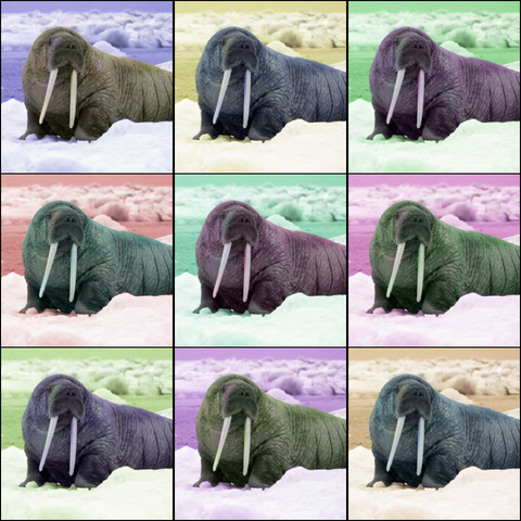 File:Walrus Pop Art.png