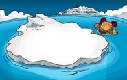 Iceberg 2008