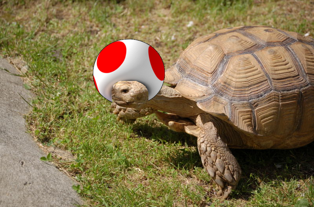 File:Turtle Shroom.PNG
