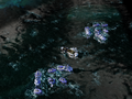 Escort Fleet.png