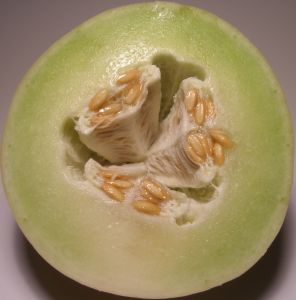 Honeydew Melon2