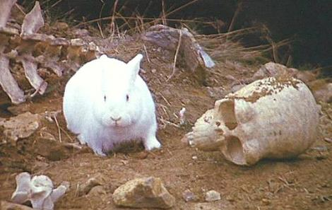 File:Killer rabbit!!!!.jpg
