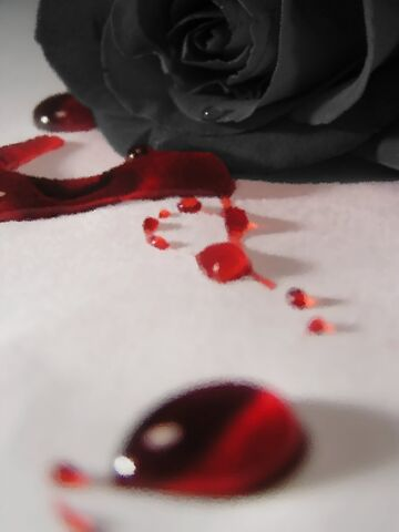 File:Bleeding Rose by quinae.jpg