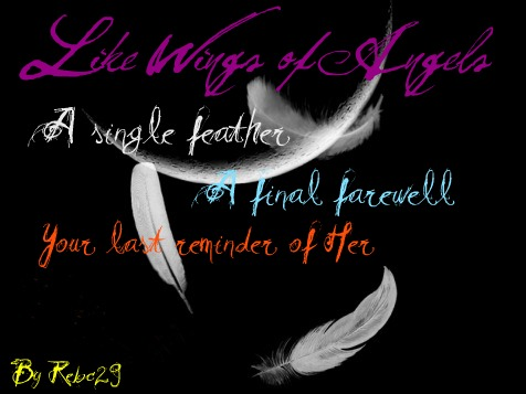 Falling-angels-feathers-lovely