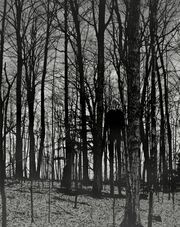 Slender-man-in-woods