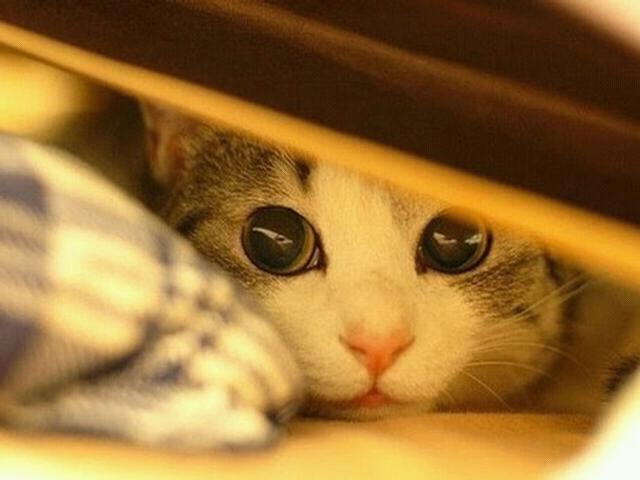 File:Cats2.jpg