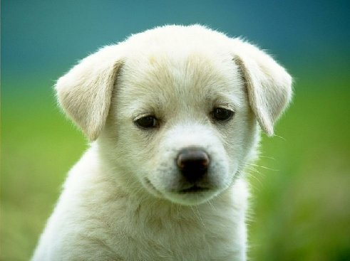 File:Puppy-dog.jpg