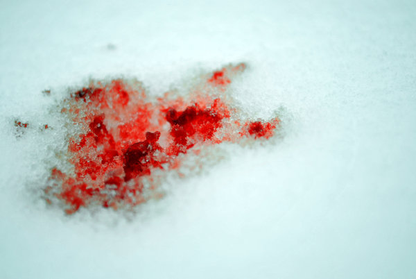 File:Bloody snow iii by slittomyguts-d33uuna.jpg