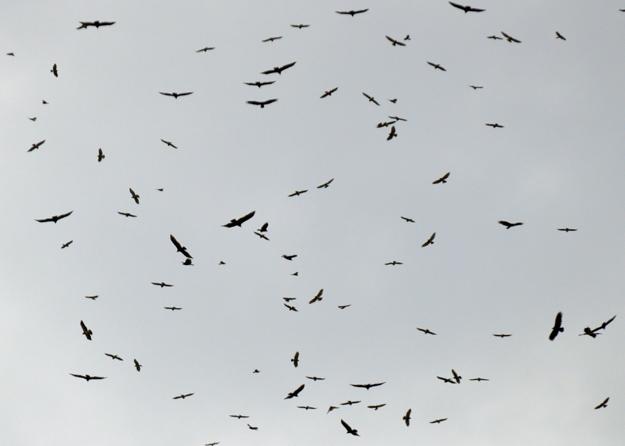 File:Hawks1.jpg