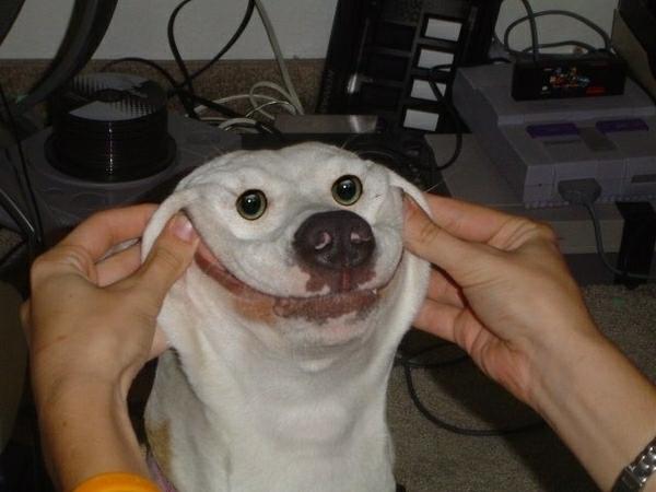 File:Smiling dog.png