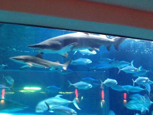 File:Shark.jpg
