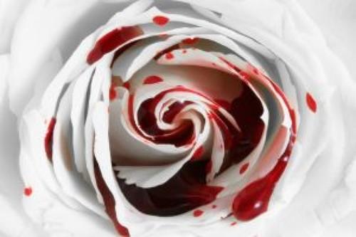 File:Splattered Rose.jpg