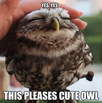 File:Dr. Baby Owl.jpg