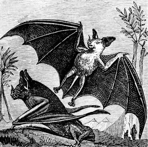 File:PSM V07 D665 Vampire bat of south america.jpg