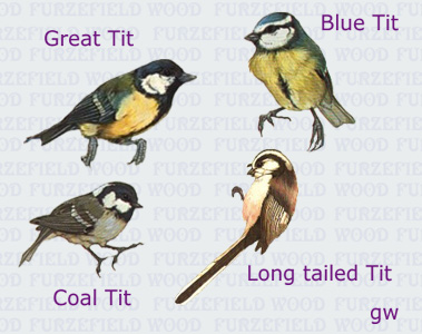 File:Tits.jpg