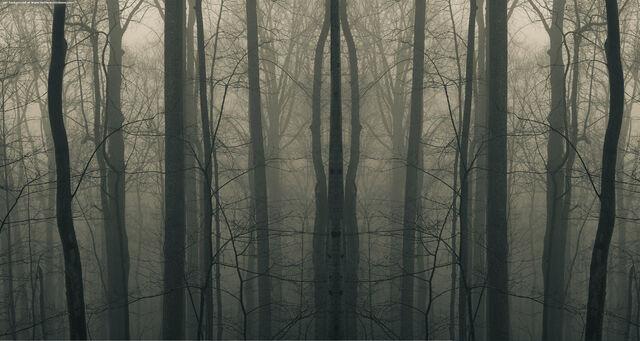 File:Woods787j.jpg