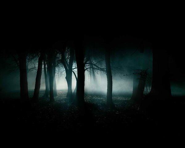 File:Dark-forest-35836.jpg
