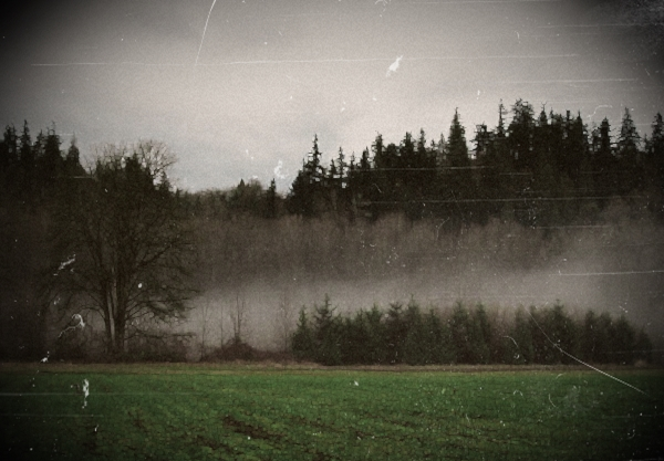 File:Foggy field.jpg