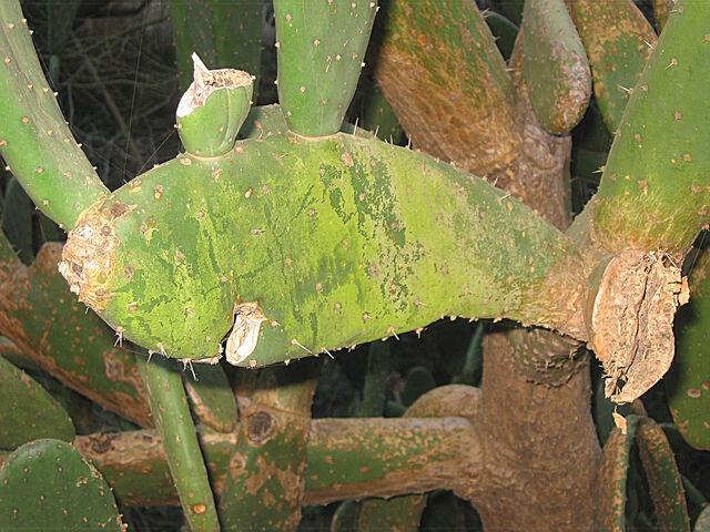 File:Cactus fish.jpg