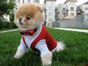 Khloe-Kardashian-Boo-the-Dog-Facebook-10261044-580x435