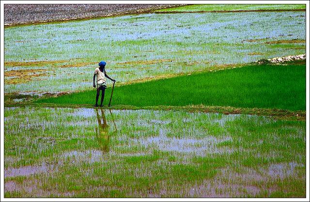 File:Man in the field.jpg