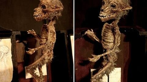 Making Monsters - Physical Evidence of Cryptids?