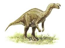 Muttabarrasaurus