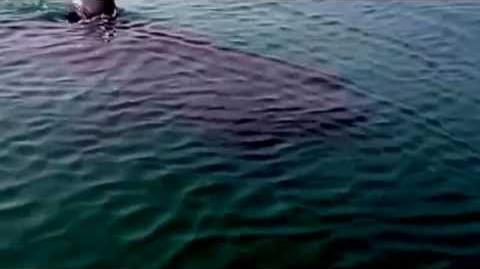 Megalodon Shark Caught On Tape Up Close Footage By   Autos