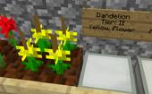 DandelionBreeding