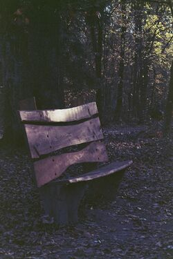 Witch-Bench