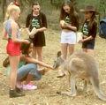 JoJo Nia Kendall Maddie Mackenzie with kangaroo 2015 crop-levels