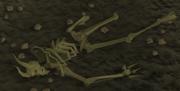 Dragonkin skeleton
