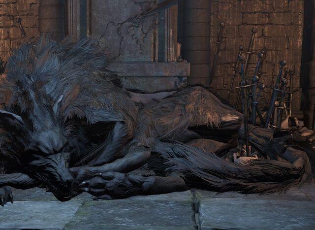 File:Old wolf (2).jpg