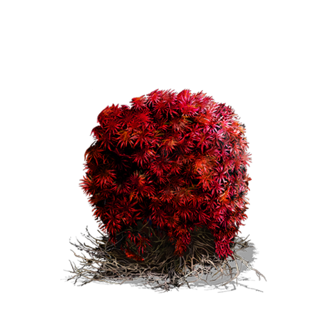 File:Bloodred Moss Clump (DSIII).png