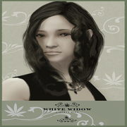 White Widow Werbung.png