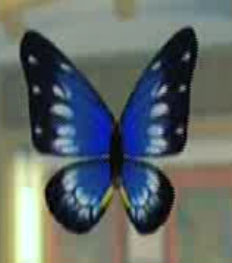 File:DOAXBVButterflyHairClip(Blue).jpg