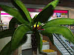 Dead rising entrance plaza grapefruit palm tree