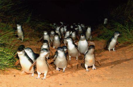 File:Penguin7.jpg