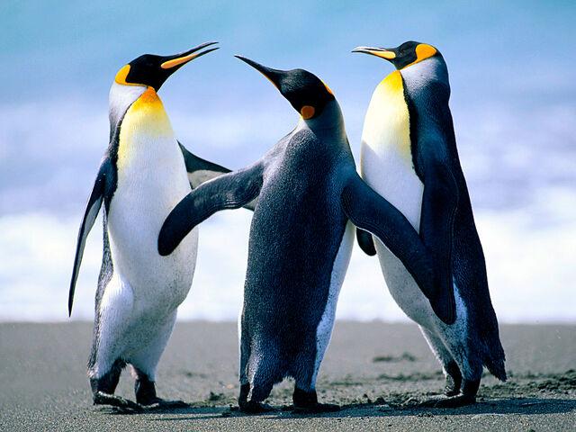 File:PenguinsxD.jpg