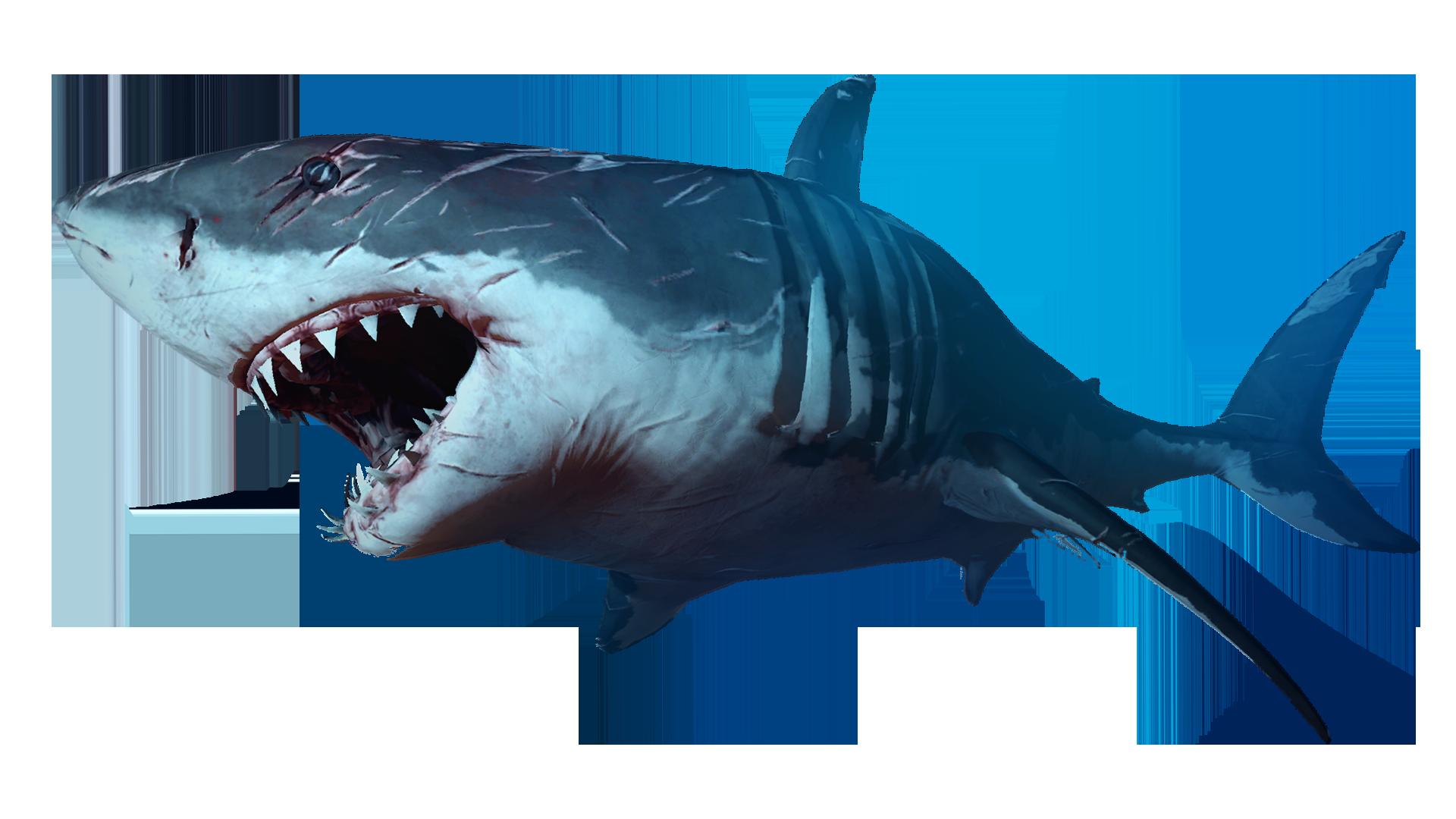 Super Games - Shark Games - Super Games - Play Free Cool ...