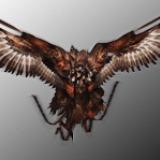 File:Griffon (PSN Avatar) DMC.png